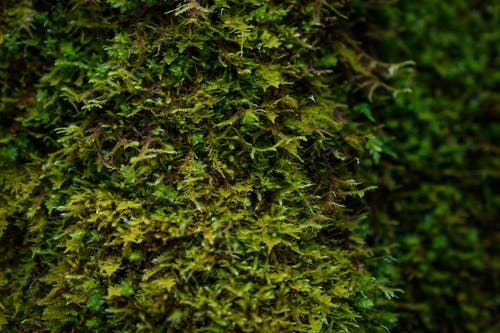Free stock photo of damp, flora, forest