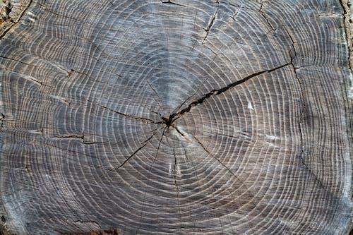 Immagine gratuita di albero, astratto, bellezza nella natura, brigworkz