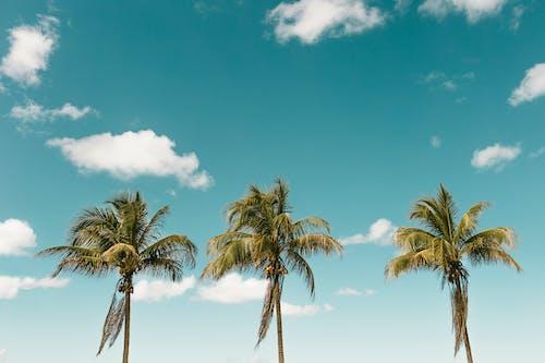 Foto d'estoc gratuïta de cel, coco, estiu, exòtic