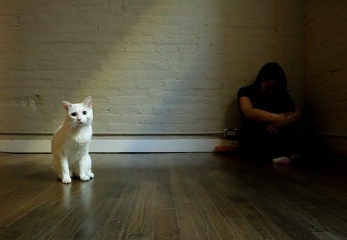 Free stock photo of aislado, aislamiento, contraste