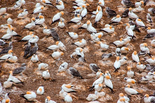 Flock Of White And Black Birds On Ground