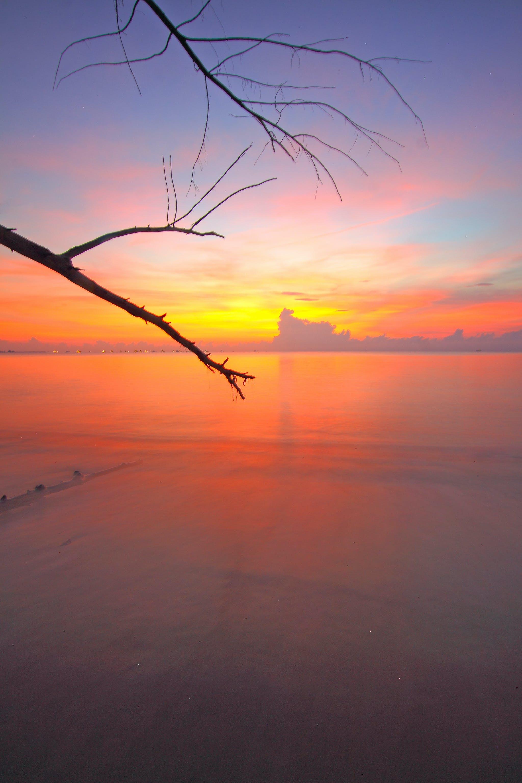 Gratis stockfoto met boom, dageraad, h2o, hemel
