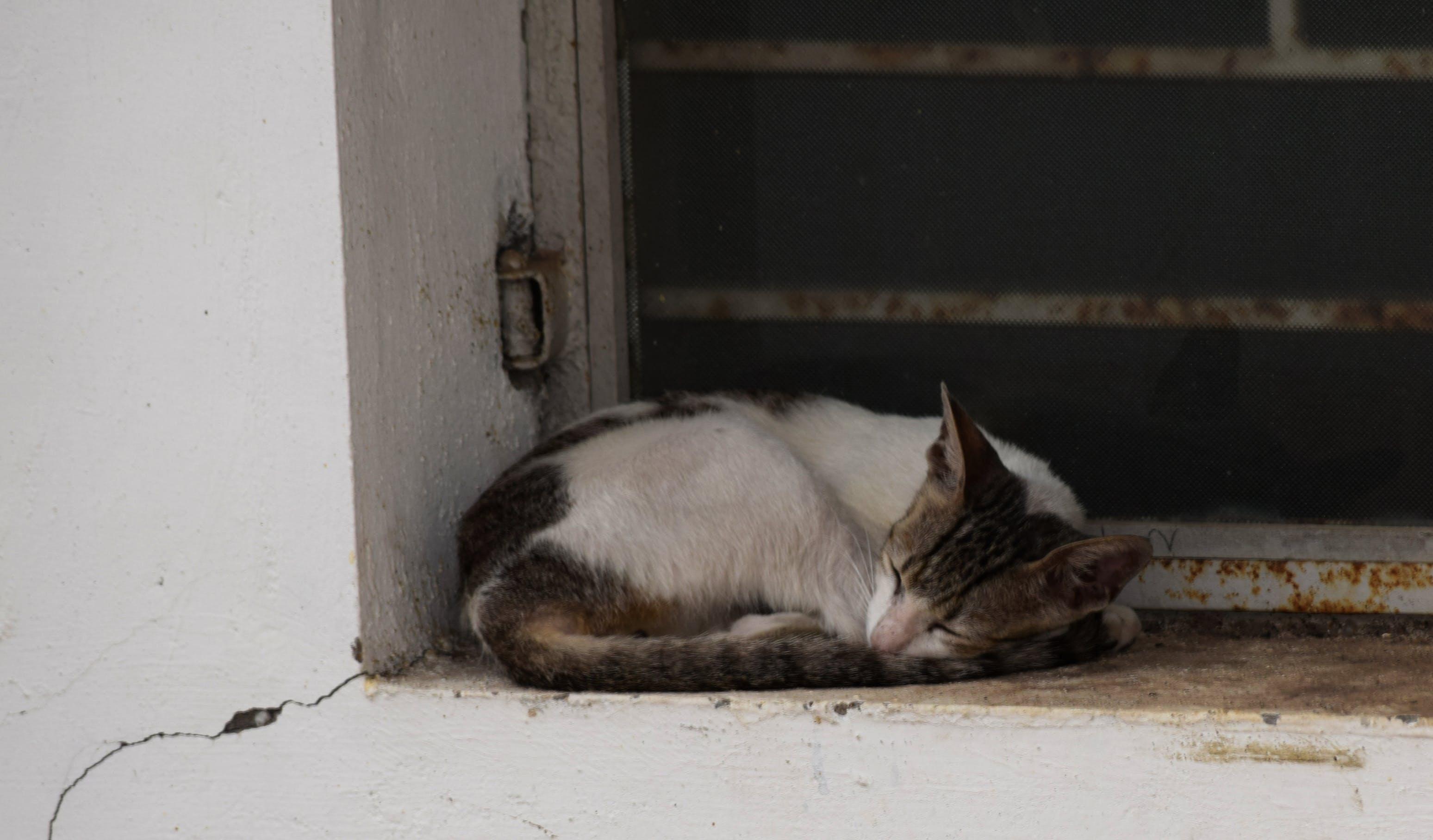 Free stock photo of cat, sleepy