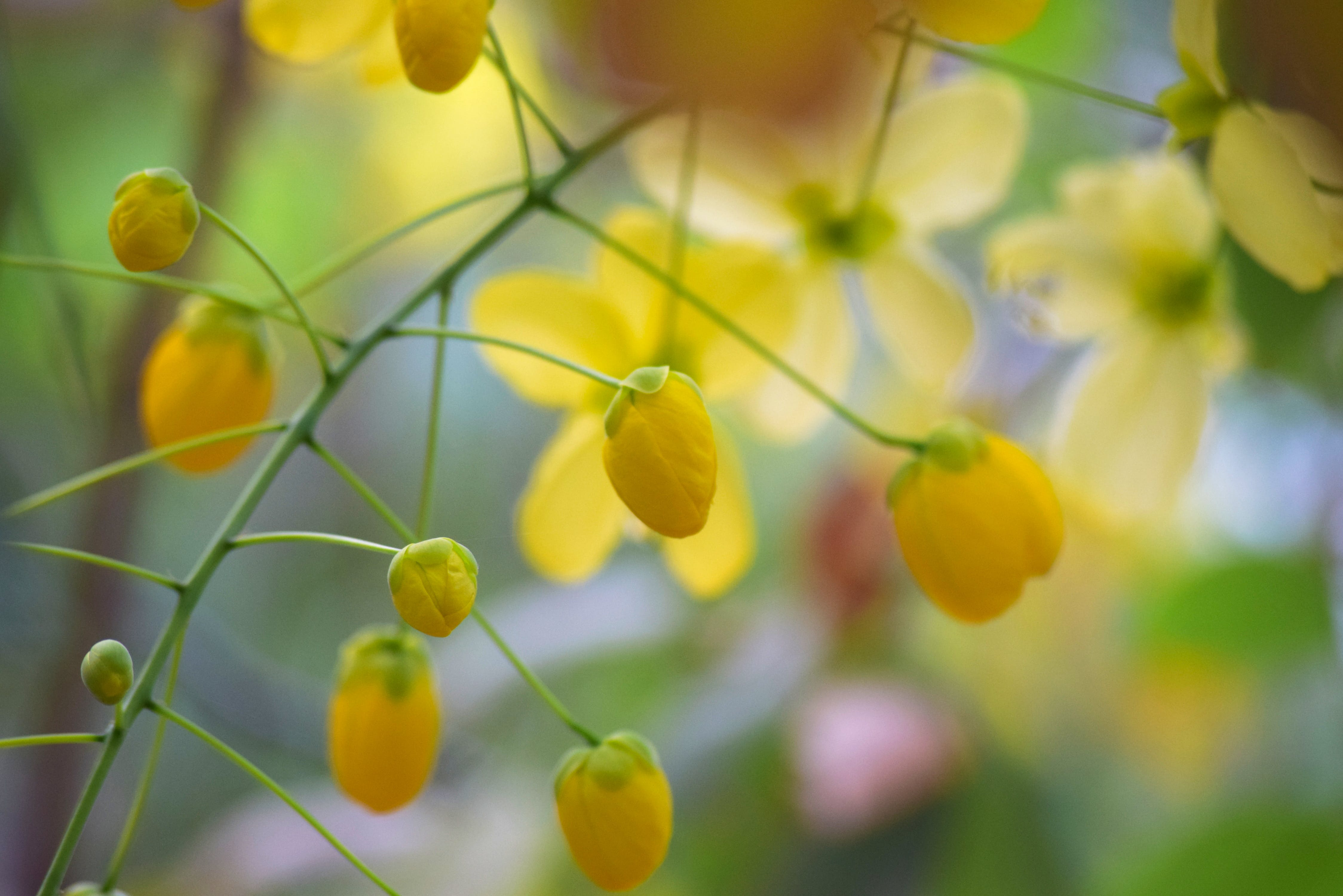 Free stock photo of beautiful flowers, yellow flowers