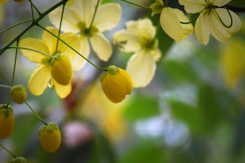 Free stock photo of golden yellow, yellow flowers