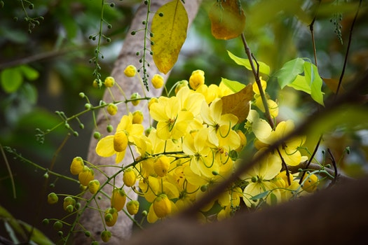 Free stock photo of yellow flowers, golden yellow