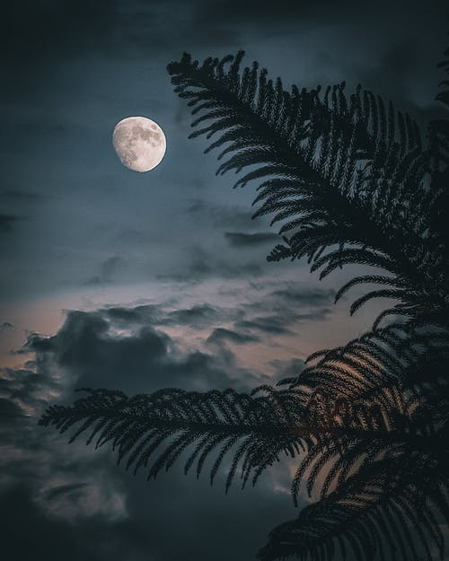 Moon in cloudy night sky over palm