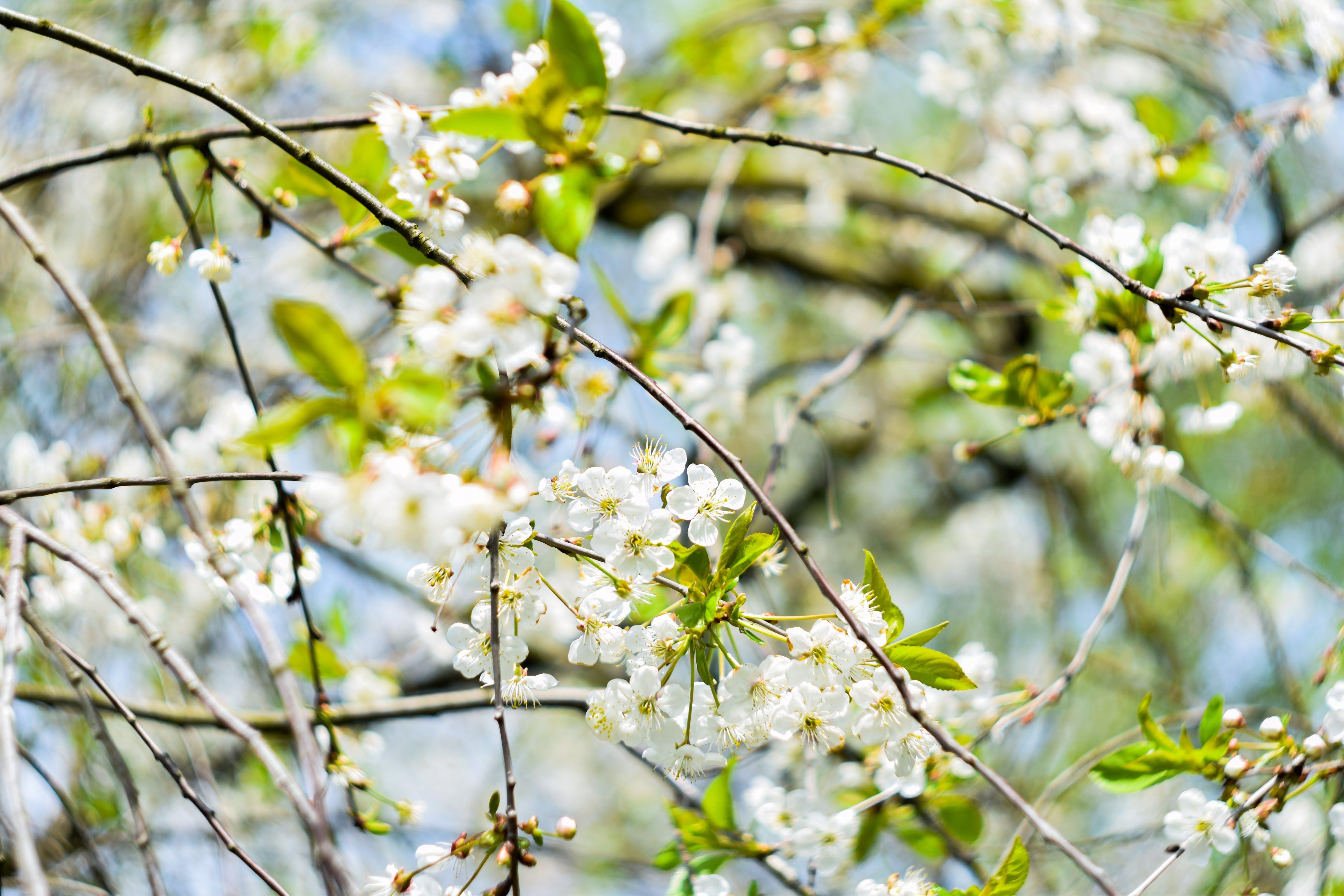 White Petal Flowers