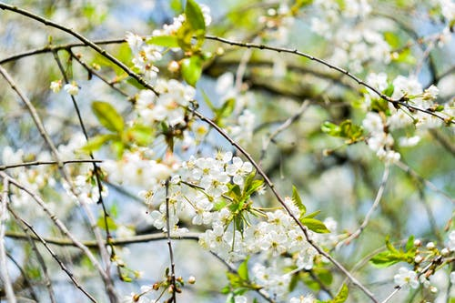 Immagine gratuita di albero, boccioli di fiori, bocciolo, concentrarsi