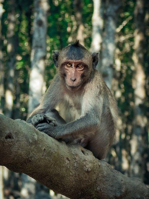 Gratis lagerfoto af abe, dyr, dyrefotografering, dyreliv