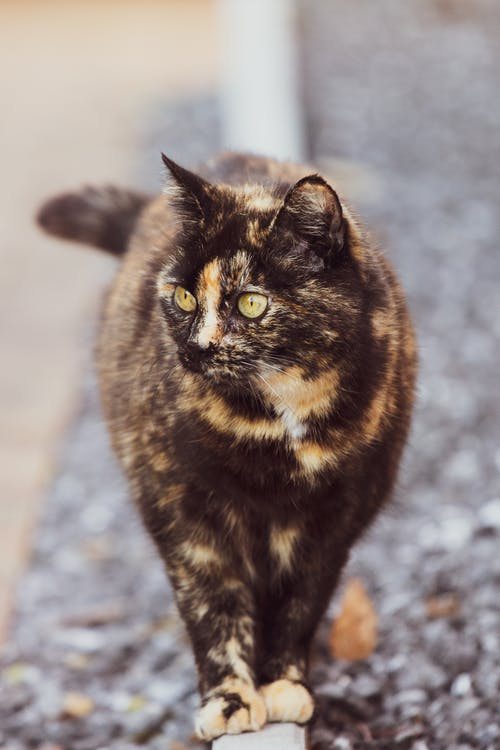 Black and Brown Cat on Gray Concrete Floor