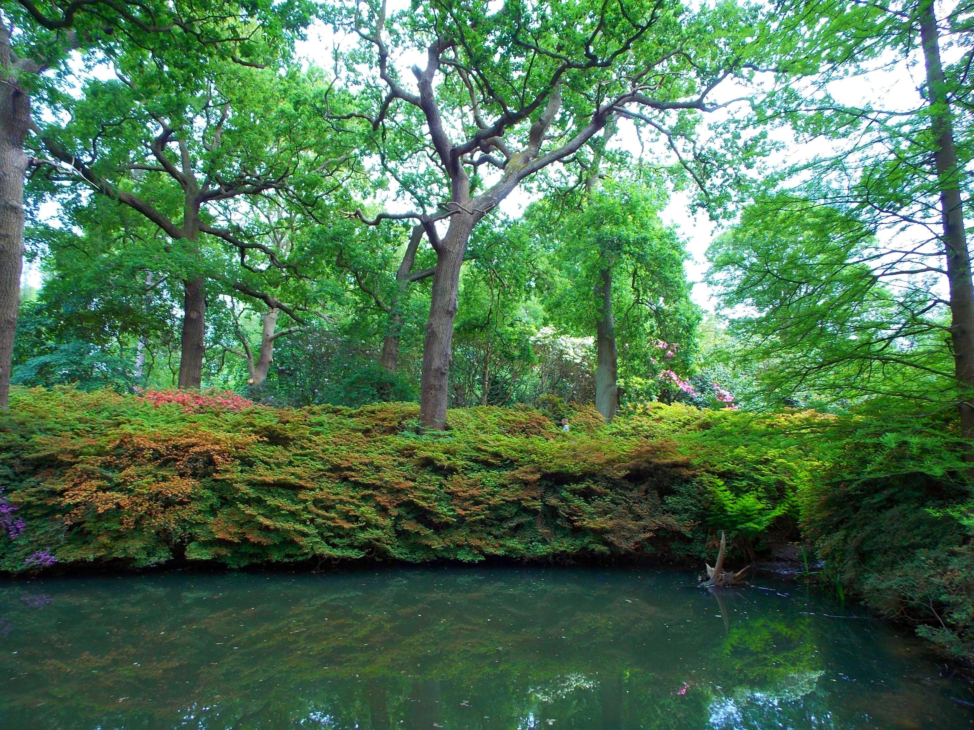 countryside, daylight, environment