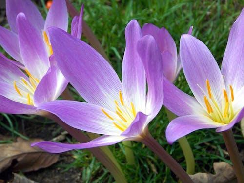 Darmowe zdjęcie z galerii z delikatny, głębia pola, kwiaty, kwitnąć