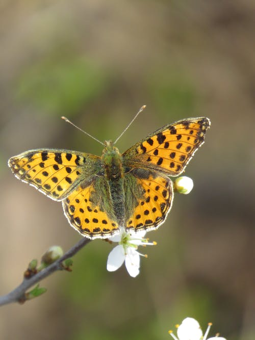 Colorful butterfly sitting on tree twig with blooming flowers