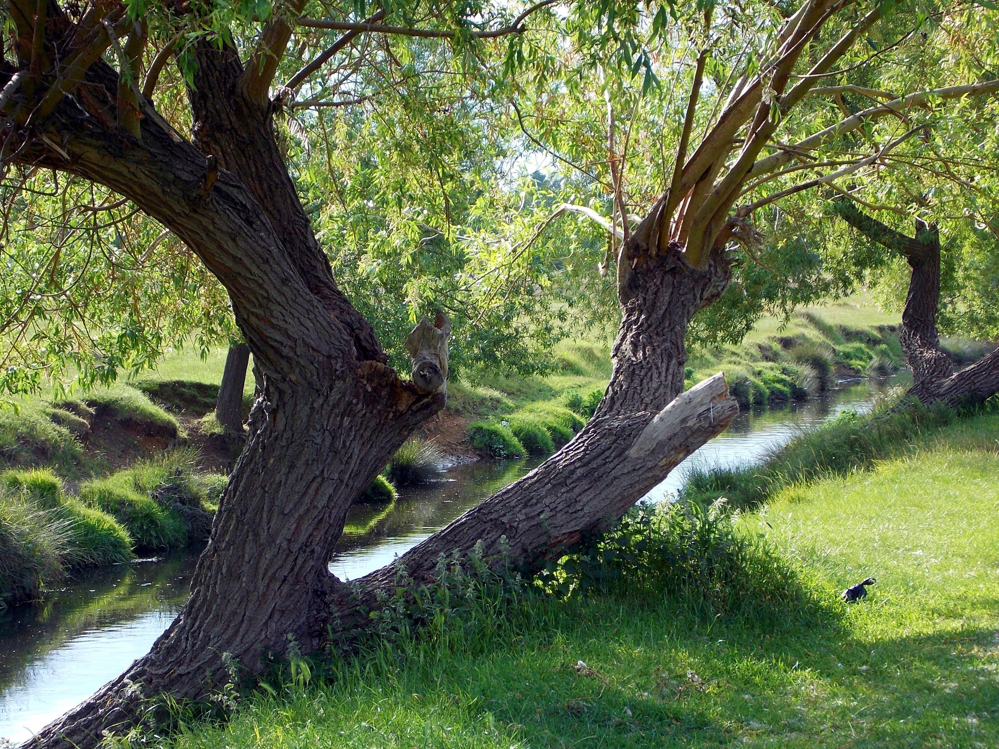 Foto d'estoc gratuïta de aigua, arbres, baguls, boscos