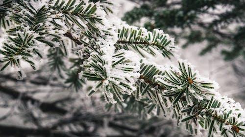 冬季, 分公司, 分枝 的 免費圖庫相片