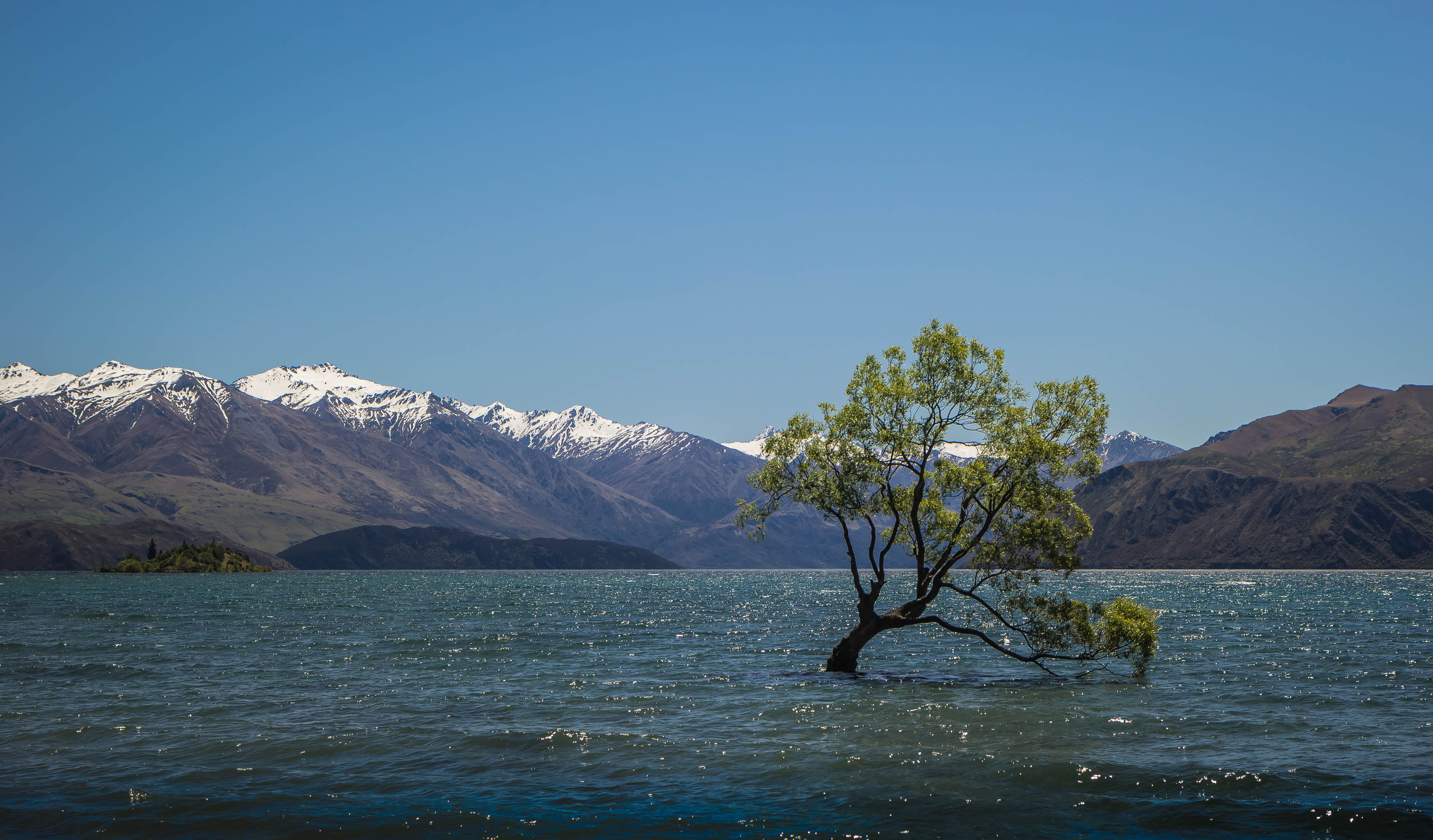 Free stock photo of lake, mountains, new zealand, wanaka tree