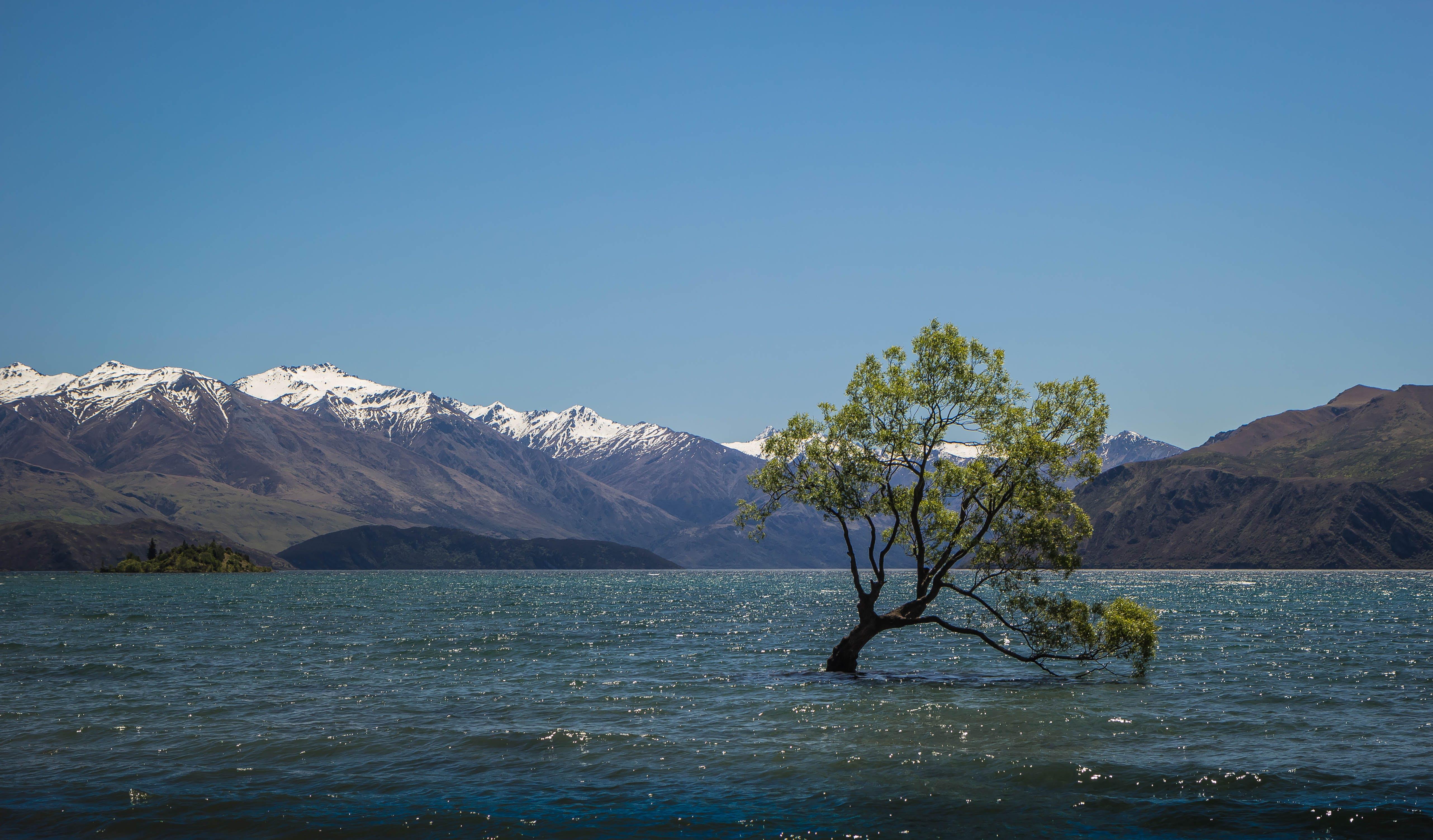 Free stock photo of mountains, lake, new zealand, wanaka tree