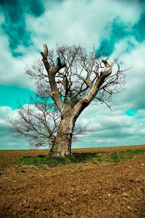 Free stock photo of bare tree, beautiful sky, dirt