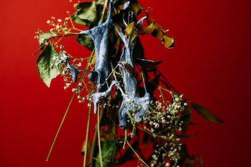 Darmowe zdjęcie z galerii z czerwony, gałąź, kolory, kwiaty