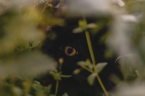 Photos gratuites de beaux yeux, chat, oeil d'animal
