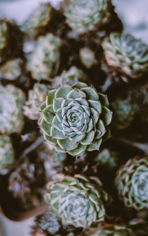 Бесплатное стоковое фото с завод, кактусы, колючий, максросъемка