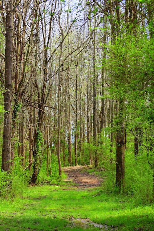 Kostenloses Stock Foto zu bäume, holz, natur