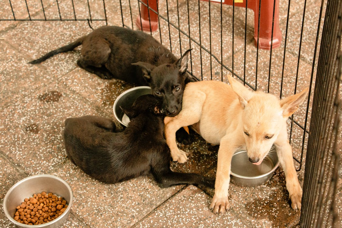Adorable puppies playing on tile pavement near fence