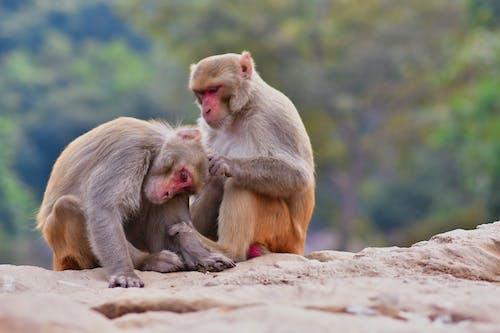 Gratis stockfoto met aanbiddelijk, aap, affectie