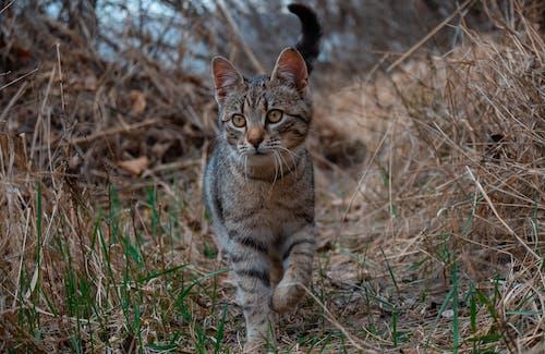 Tabby Cat On Brown Grass Field
