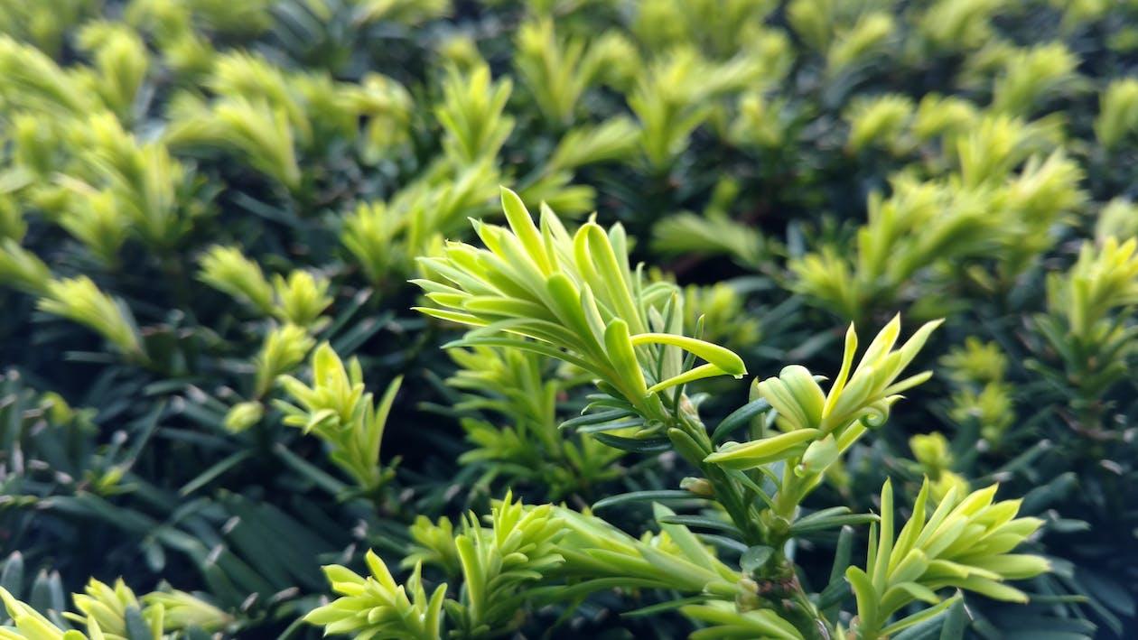 Kostnadsfri bild av buske, gren, grön