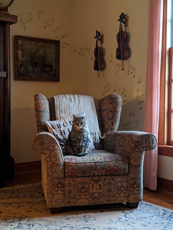 Adorable fatty cat sitting in cozy old armchair at home