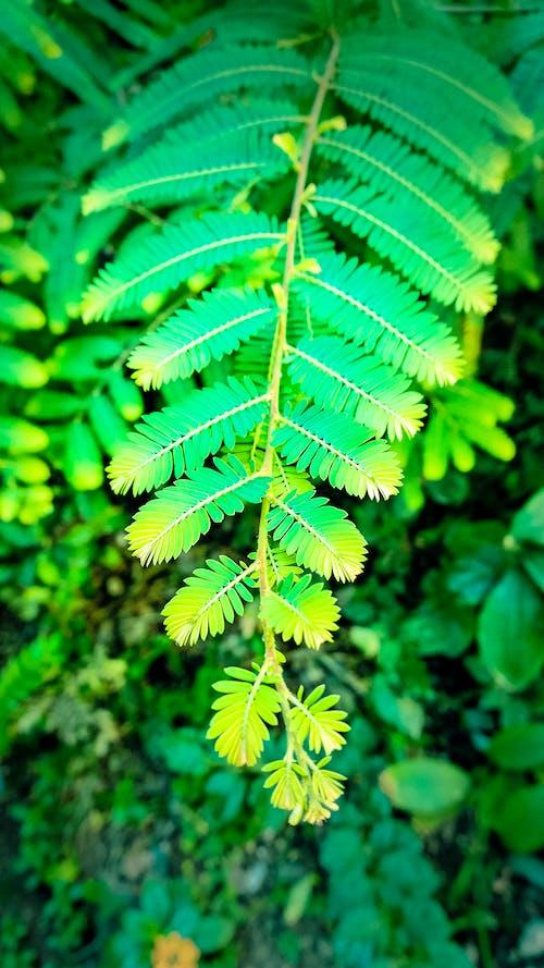 Immagine gratuita di foglia verde, giardino domestico, natura