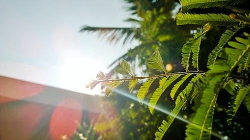 Ilmainen kuvapankkikuva tunnisteilla auringonsäde, auringonvalo, harrastus, kotipuutarha