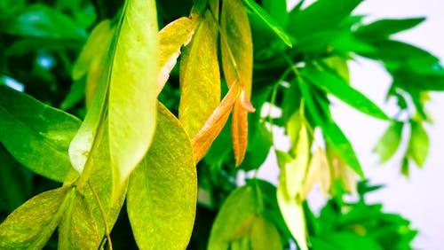 Ilmainen kuvapankkikuva tunnisteilla kotipuutarha, luonto, vihreä