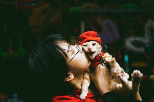 Základová fotografie zdarma na téma chung thung thú cưng, chụp ảnh thú cưng, con mèo