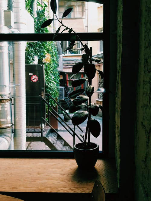 Potted Plant on Window Pane