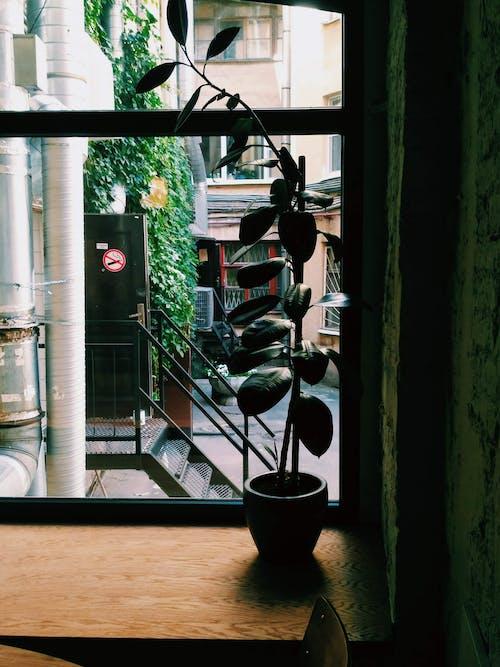 Gratis arkivbilde med arkitektur, barkafé, blad, blomst
