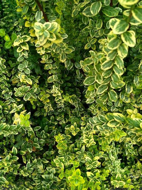 Gratis arkivbilde med årstid, blad, botanisk, farge