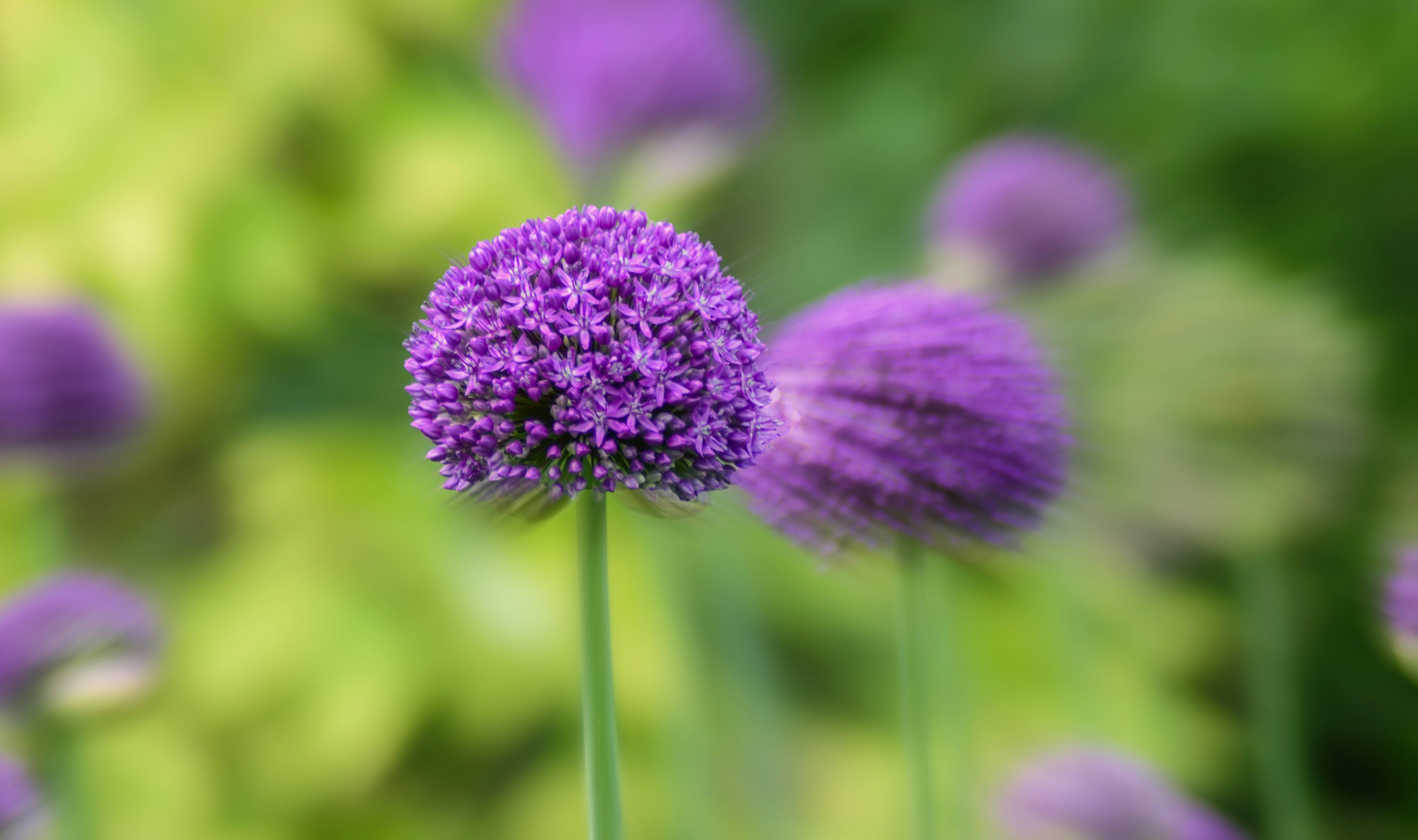 Ảnh lưu trữ miễn phí về cận cảnh, cánh hoa, cánh đồng, hệ thực vật