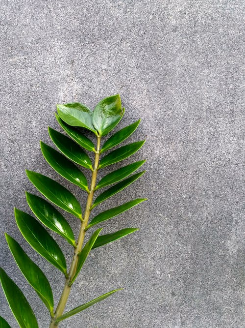 Gratis arkivbilde med blad, farge, flora, frodig