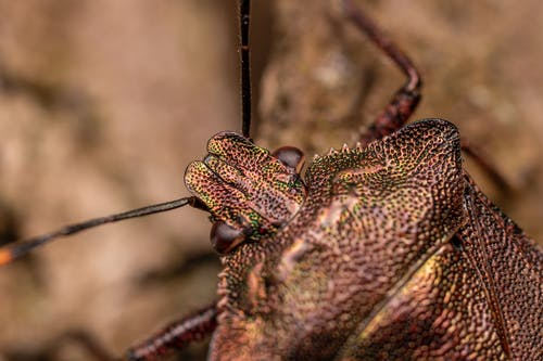 From above of red legged shieldbug with antennae crawling on ground in forest