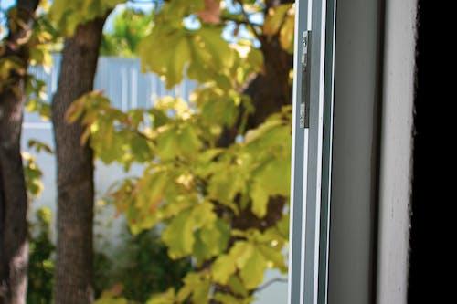 ağaçlar, pencere görünümü, yakından içeren Ücretsiz stok fotoğraf