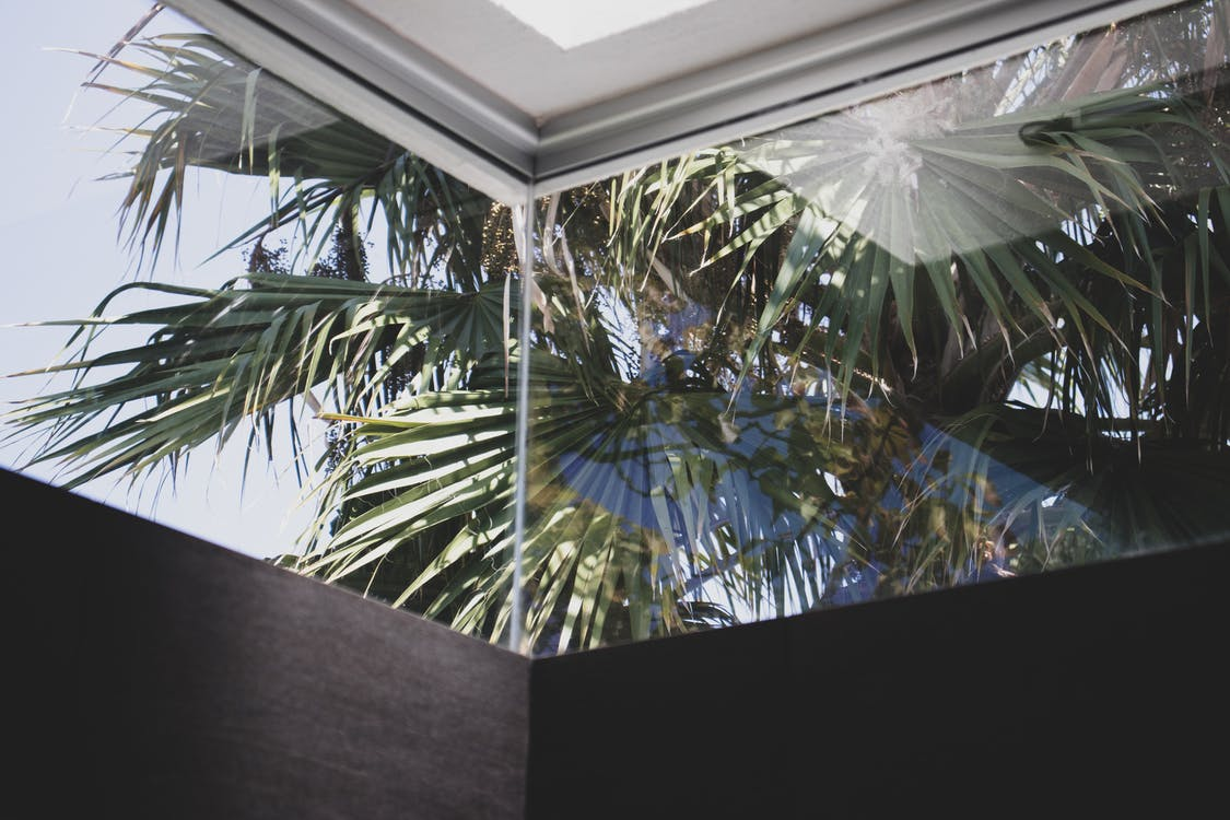 Free stock photo of corner, corners, palm trees