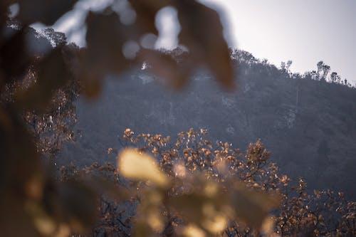 ağaçlar, odaklanmamış yapraklar, tepeler içeren Ücretsiz stok fotoğraf