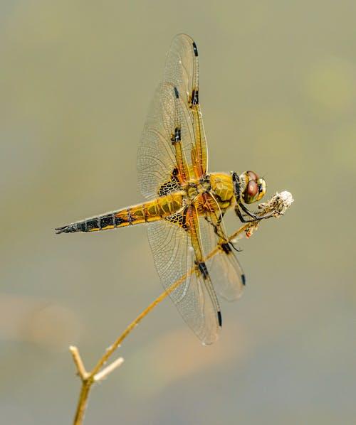 Photos gratuites de ailes, animal, concentrer