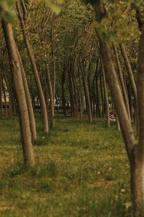 光, 光線, 公園, 增長 的 免費圖庫相片