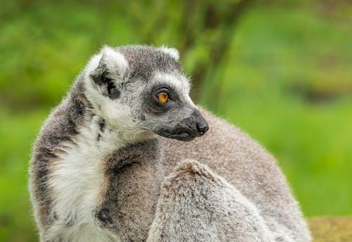 Foto profissional grátis de animais selvagens, animal, ao ar livre, arbóreo