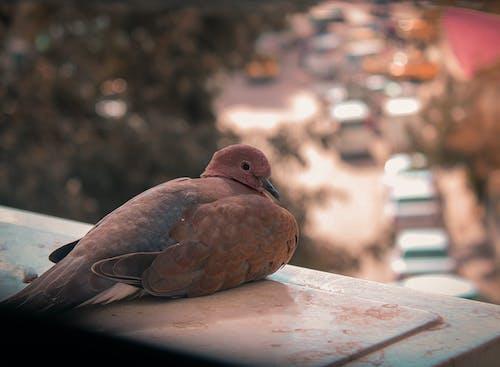 Imagine de stoc gratuită din culoarea toamnei, drum, fereastră, pasăre