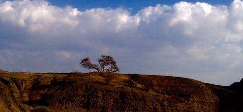 Free stock photo of fujairah, ghaf, ghaf tree, masafi